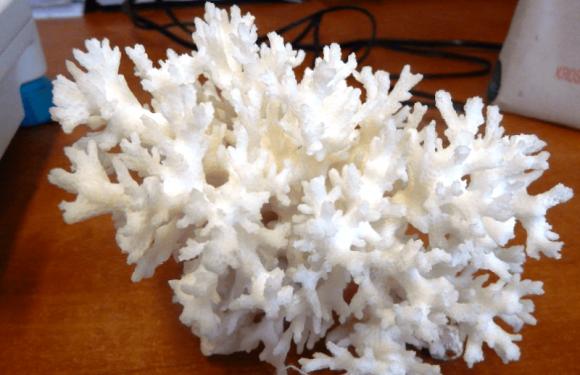 Українка хотіла ввезти у Польщу незвичну контрабанду: корал вагою понад 200г