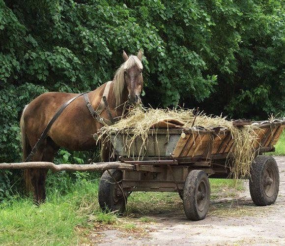 У Нижній Сілезії затримали візника: «Я п'яний, але кінь тверезий і знає дорогу додому»