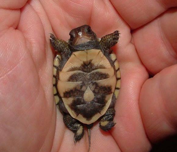 У Вроцлавському зоопарку з'явилися нові черепахи [+ФОТО]