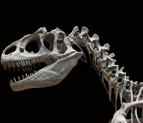В Польщі на кукурудзяному полі знайшли кістки динозавра