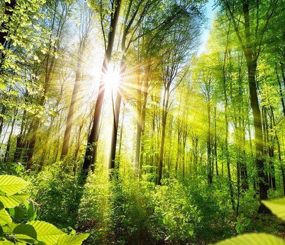 З нагоди Дня Незалежності у Нижній Сілезії засадять ліс