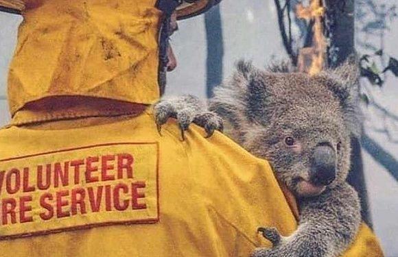 Вроцлавський зоопарк допоможе тваринам з Австралії, котрі потерпають від пожеж