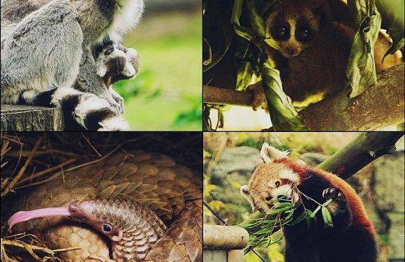 Вроцлавський зоопарк допомагає тваринам з усього світу: він виділив на це пів мільйона злотих [+ФОТО, ВІДЕО]