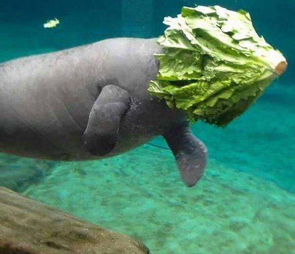 Дізнайся, чим ласують тварини у Вроцлавському зоопарку [+ФОТО]