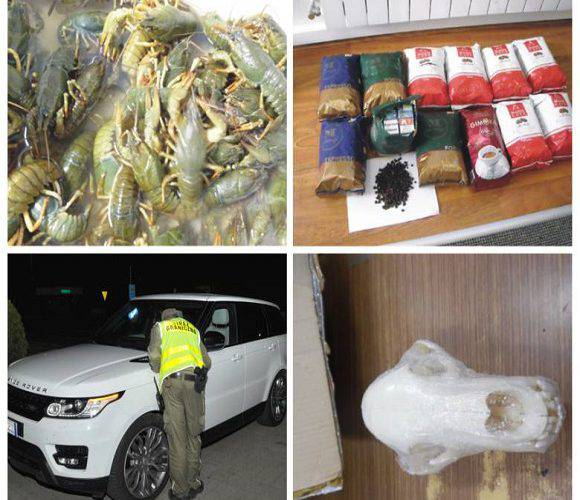 Підбірка найдивніших контрабандних товарів, які вилучили на польському кордоні у 2019 році [+ФОТО]
