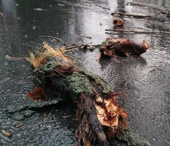 В Польщі позривало дахи і поламало дерева: країну накрив потужний шторм [+ВІДЕО]