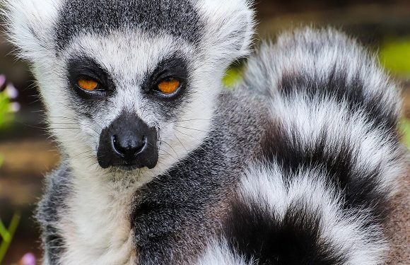 Вроцлавський зоопарк знову відкривається для відвідувачів