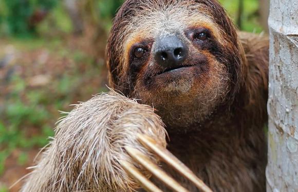 Сьогодні Вроцлавський зоопарк святкує свою 155-у річницю [+ФОТО, ІСТОРІЯ]
