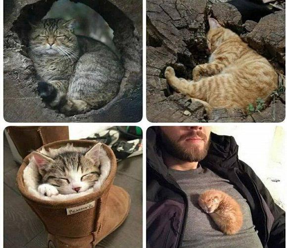 У Вроцлаві відбудеться котячий фестиваль: не пропусти