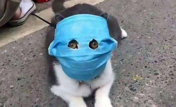 «Якщо хтось не може носити маску, він може носити щиток». Міністр охорони здоров'я Польщі нагадав про носіння масок