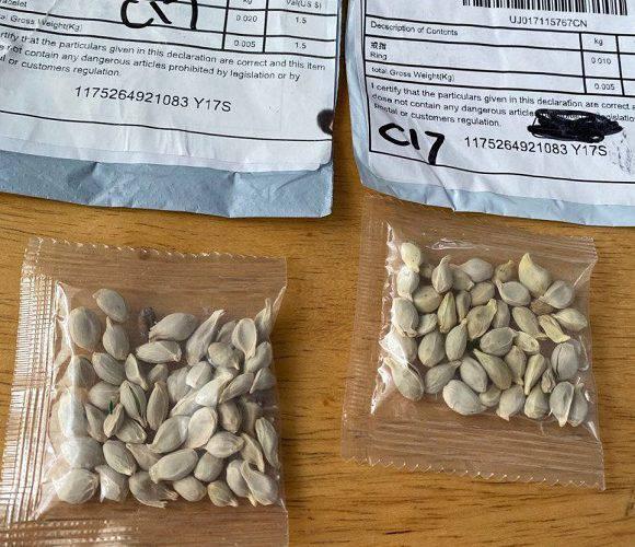 В Польщі б'ють на сполох: до людей приходять посилки з Китаю з небезпечним насінням