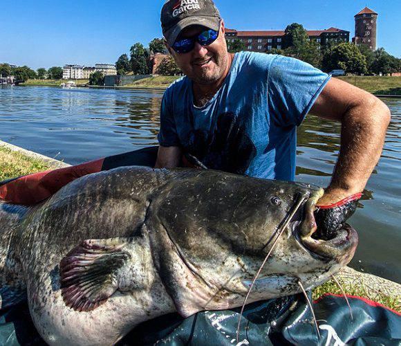 Рибалка впіймав у Кракові гігантського сома [+ФОТО]