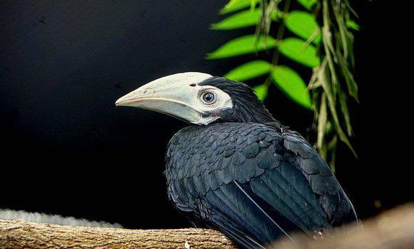 У зоопарку Вроцлава народилися троє рідкісних пташенят [+ФОТО,ВІДЕО]
