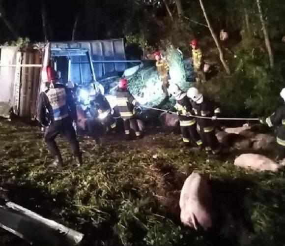 В Польщі перекинулась вантажівка зі свинями: водій загинув