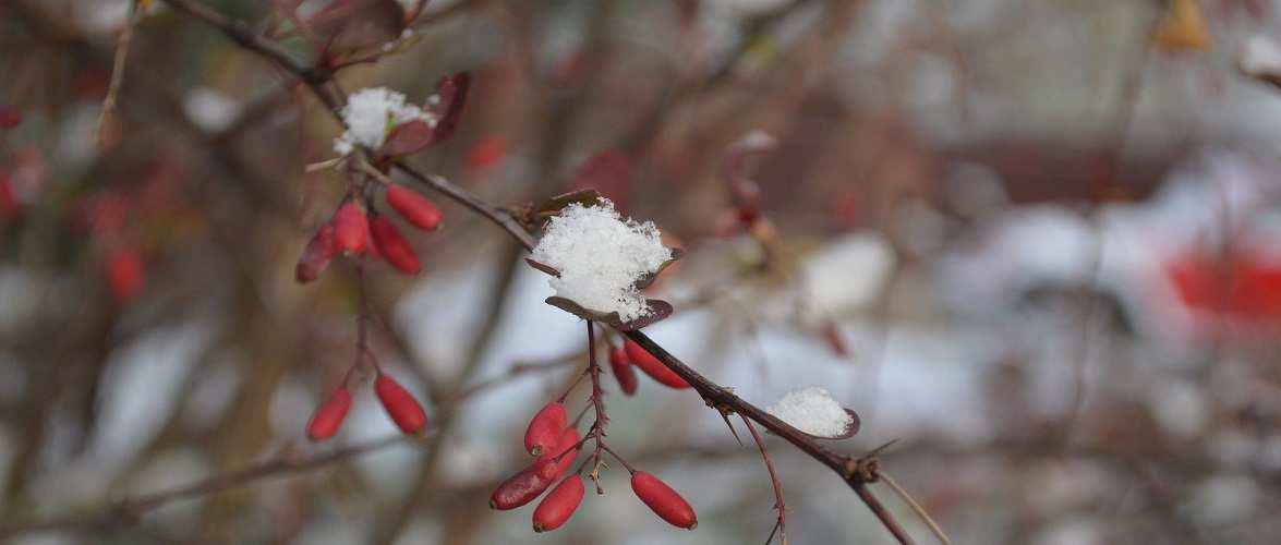 В Польщі вже випав перший сніг [+ВІДЕО]