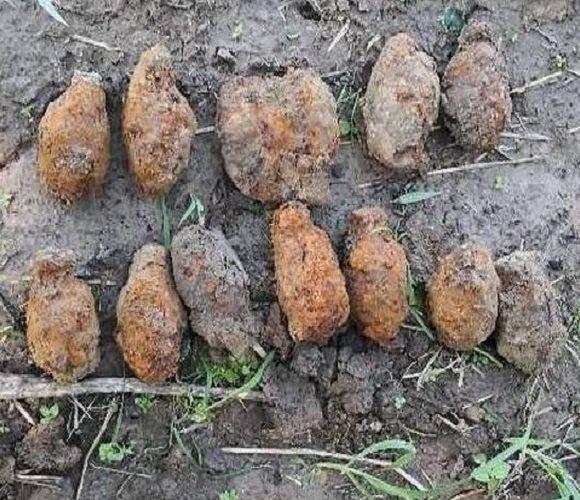 Пенсіонерка в Польщі під час прогулянки знайшла 16 гранат часів Другої Світової