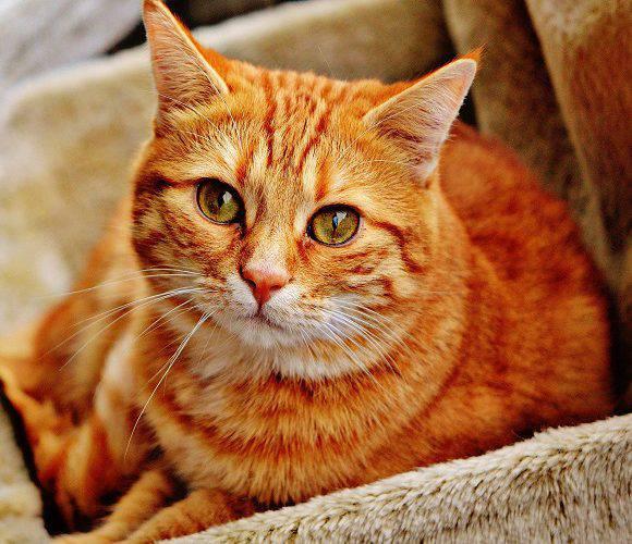 За те, що вбив кота, чоловік в Польщі відсидить рік за гратами