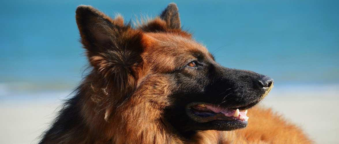 Хлопцю, який втопив собаку в Польщі, загрожує 5 років в'язниці