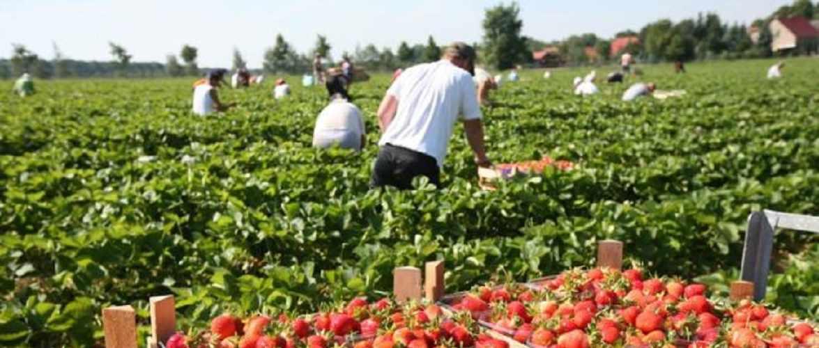 В Польщі українці працюють вдвічі більше за поляків і рідше змінюють місце роботи