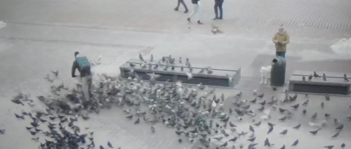 У Кракові поліція затримала велосипедиста за те, що роздавив пару голубів [+ВІДЕО]