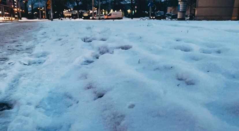 Інтенсивні снігопади та морози у Польщі: ускладнення на дорогах та ДТП
