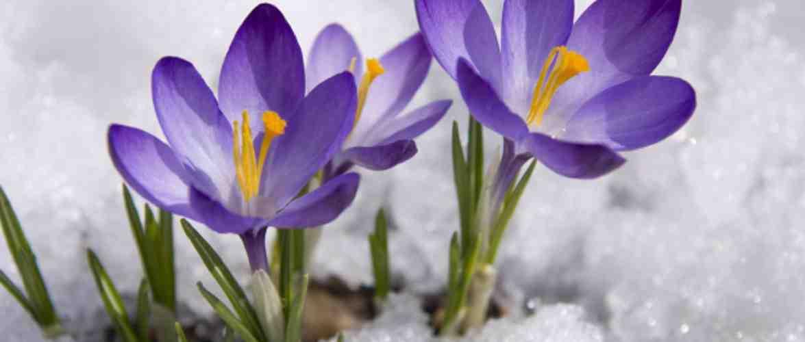 Якою буде весна у Польщі?