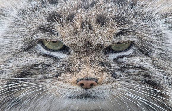 Вроцлавський зоопарк збирає кошти для лікування тварин [+ФОТОПІДБІРКА]