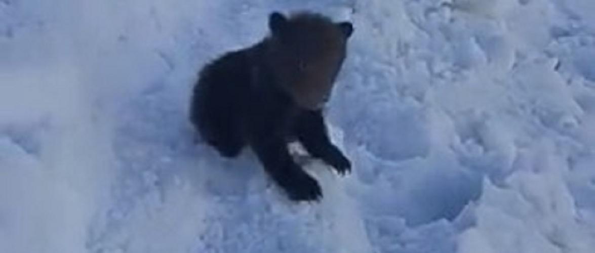 У Татрах закрили стежку, через ведмедів [+ВІДЕО]