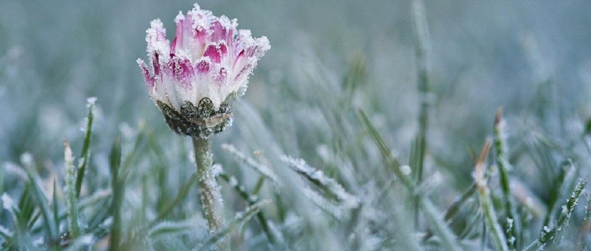 У Польщі очікуються морози до -7 градусів