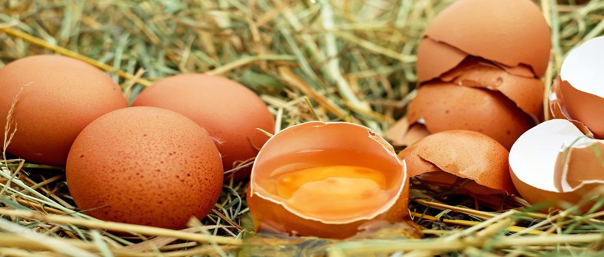 В Польщі виявили яйця, заражені сальмонелою