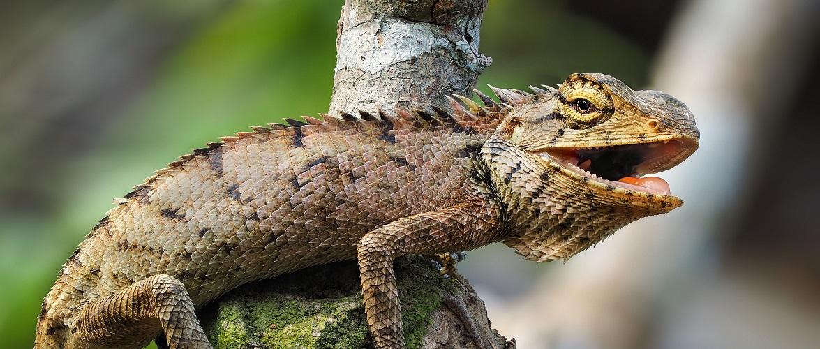 У Вроцлаві власники екзотичних тварин повинні зареєструвати їх в уженді