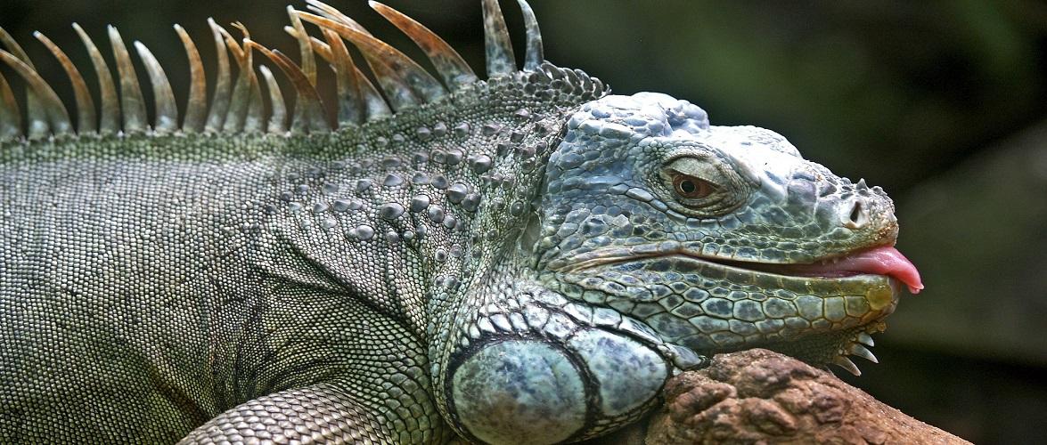 У Кракові страшний «звір» на дереві налякав місцевих жителів [+ФОТО]