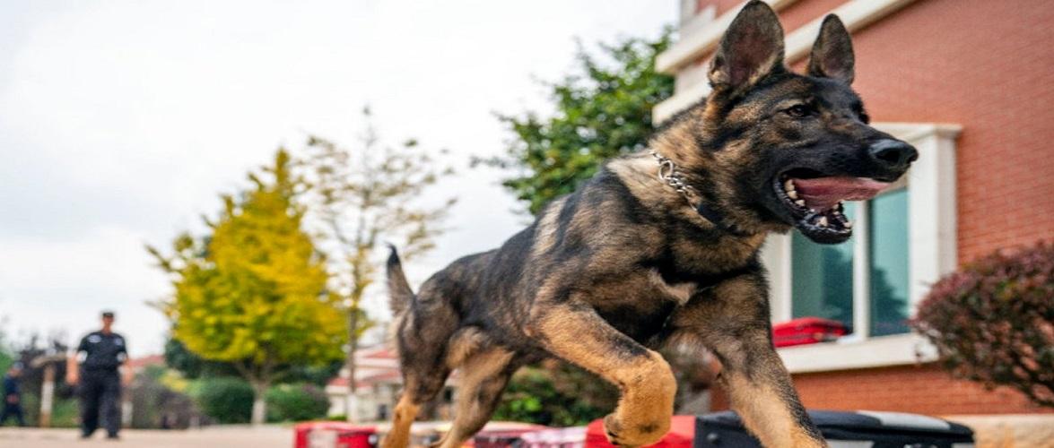 Поліцейським собакам в Польщі виплачуватимуть пенсію