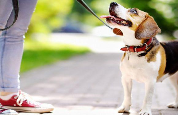 В Польщі створили групу, де допомагають людям вигулювати собак під час карантину