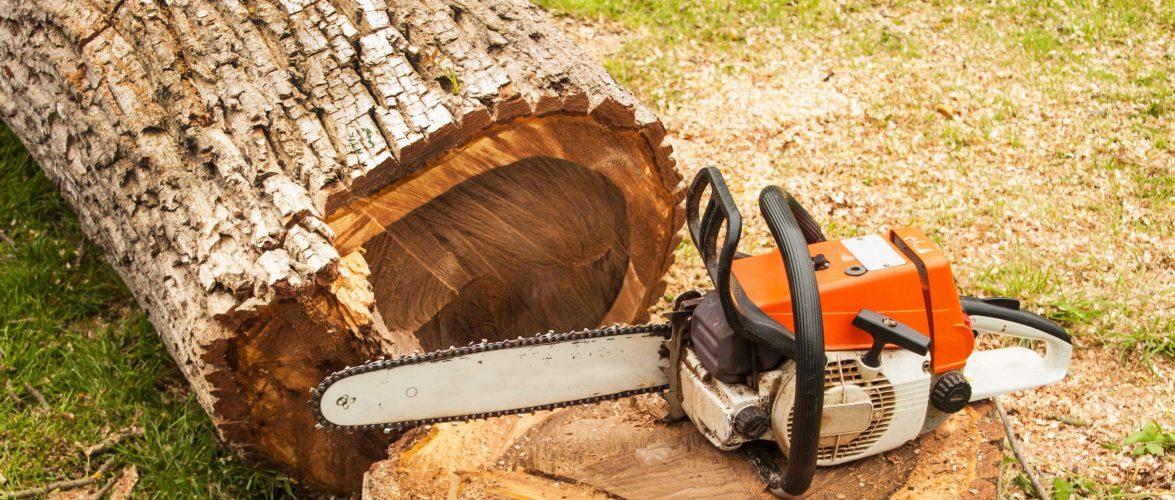 В Польщі загинув чоловік, на якого впало дерево