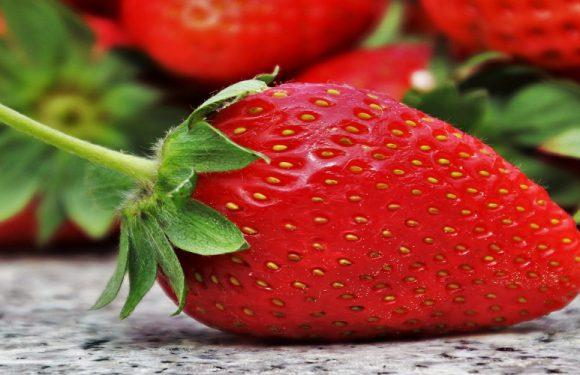 Через пандемію на зборі полуниць українці багато в Польщі не зароблять