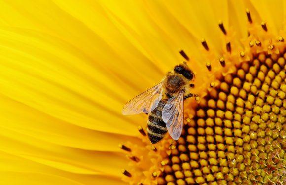 Фермер в Польщі винищив бджіл: може сісти на 8 років
