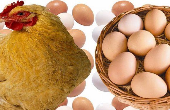 Купуєте яйця в Польщі? Обережно, можлива сальмонела