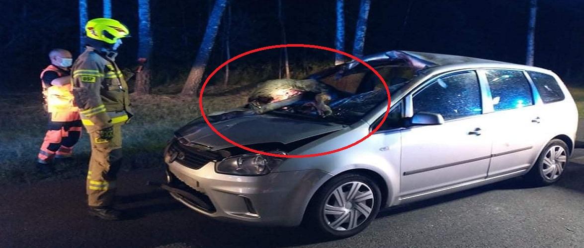 В Польщі лось вискочив на автівку: тварина загинула, а водій у лікарні [+ФОТО]