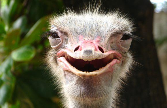 У Польщі люди викликали поліцію, щоб та… зловила страуса