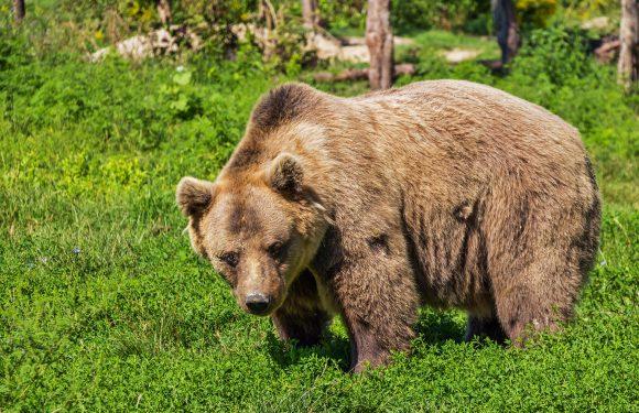 В туристичному місці у Польщі з'явився ведмідь