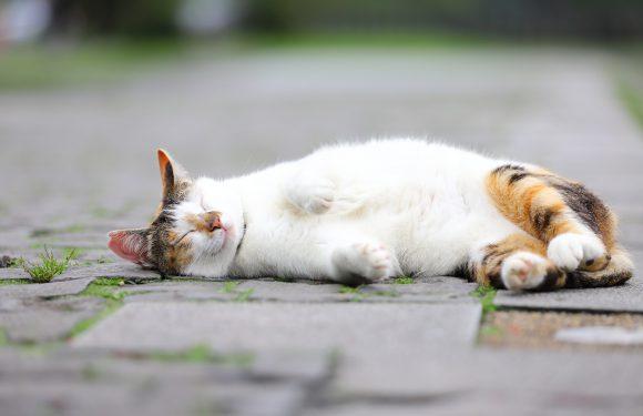Живеш у Вроцлаві? Принести старі ковдри та допоможи бездомним тваринам