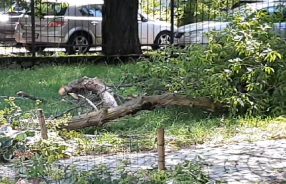 У Варшаві зламалося дерево і впало на жінку