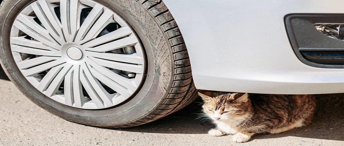 Під колесами авто в Польщі загинув 8-річний хлопчик, який просто хотів врятувати кота