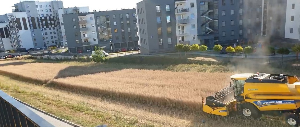 У Любліні комбайн збирає зерно серед багатоповерхових будинків