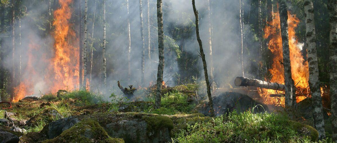Польські рятувальники допоможуть Греції в гасінні лісових пожеж