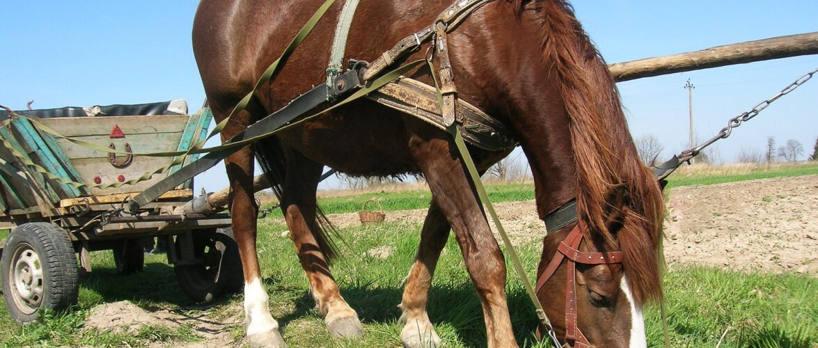В Польщі розробили план підтримки сільського господарства