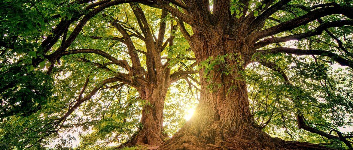 Сейм в Польщі погодився на вирубку лісу, щоб там побудувати завод