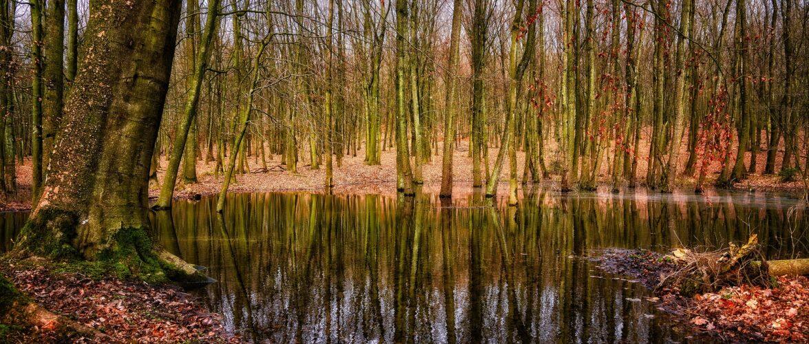 В Польщі врятували 3-х мігрантів, які ледь не потонули в болоті
