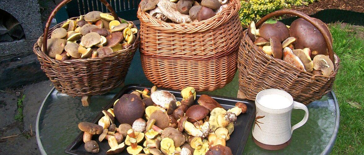 Відкриваємо карти: де в Нижній Сілезії можна збирати гриби?